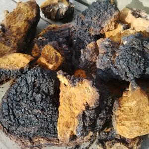 chaga-mushroom-chunks