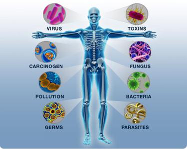 immune-system vitamin D Auum omega 3