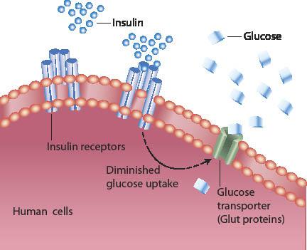 Diabetes and Omega 3