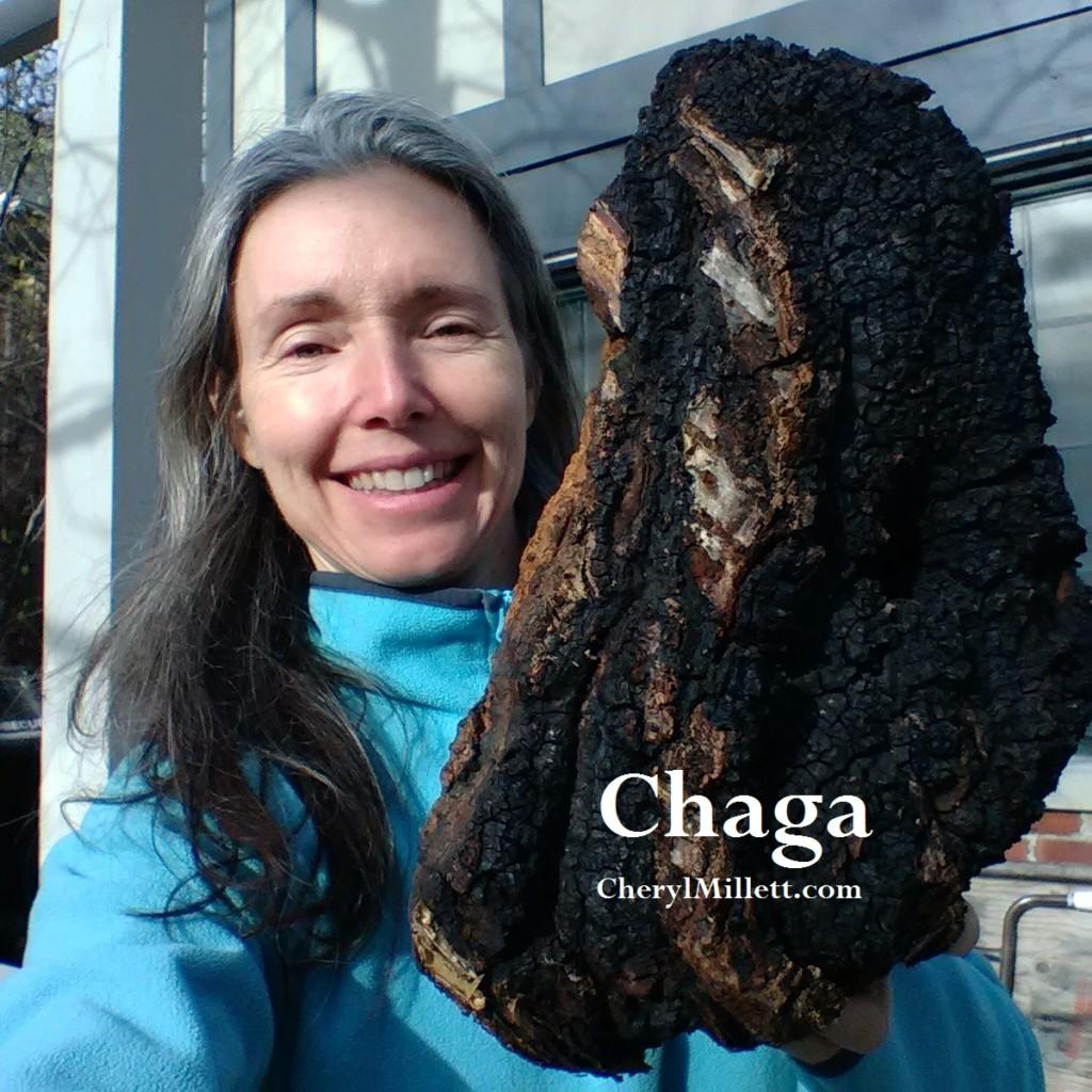 Chaga Mushroom Chunks 1 lb