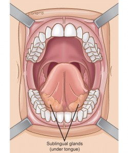 tongue sublingual