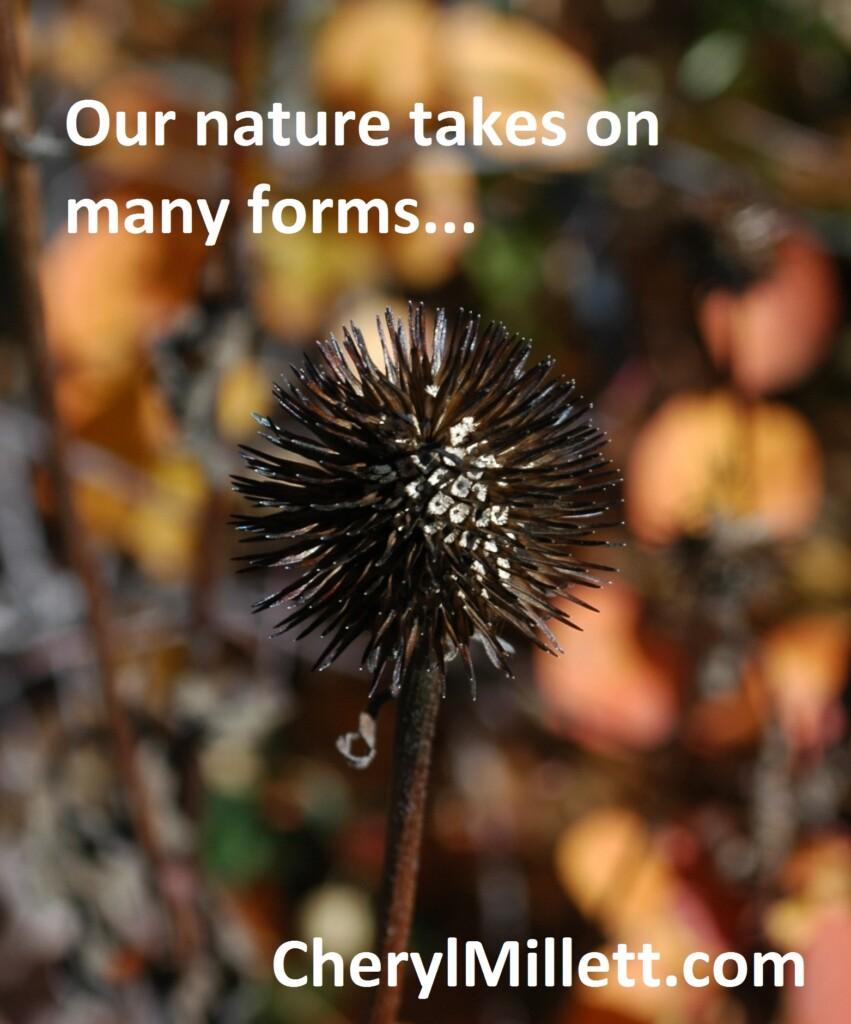 True Nature Cheryl Millett Lessons in Nature seal oil